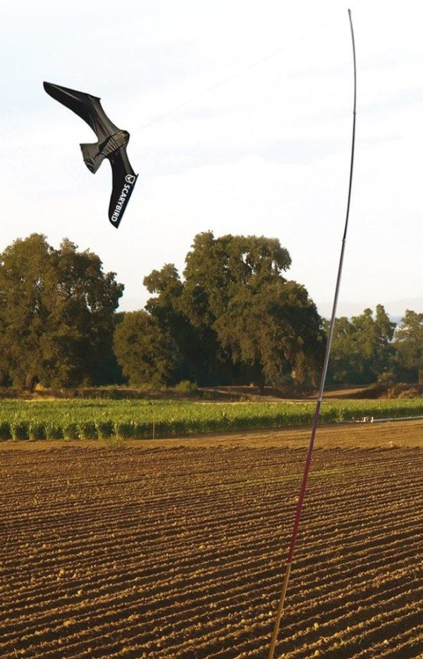 Scarybird flying in fields