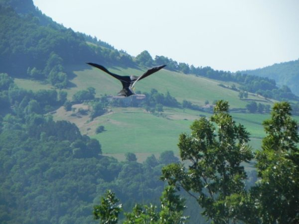 Scarybird flying in mountain